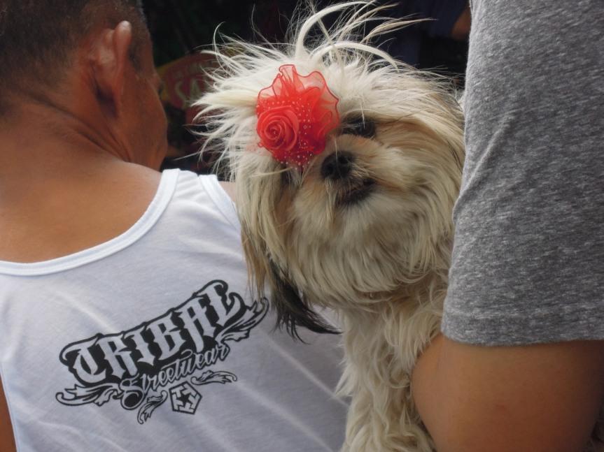 Random Cute Dog with a Red Ribbon