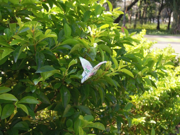 Butterfly Origami I left within the QC Memorial Circle Park