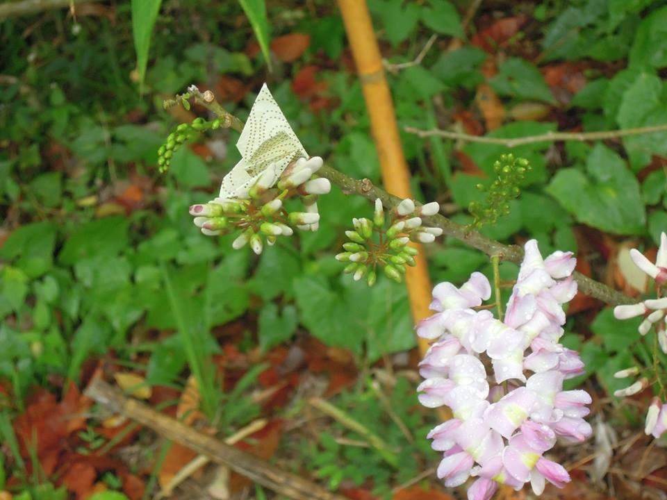 m butterfly essays