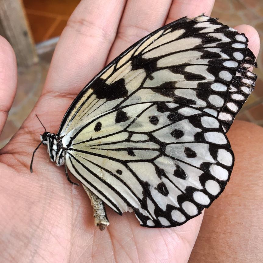 ang buhay parang butterfly… (weh!?)